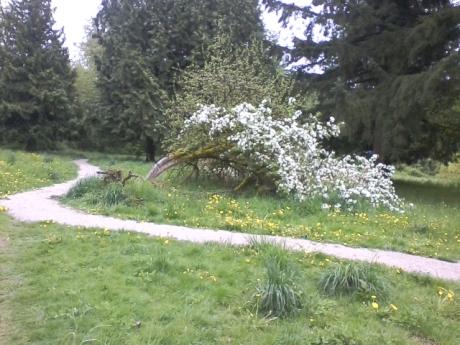 empty_lot_fallen_tree_inbloom