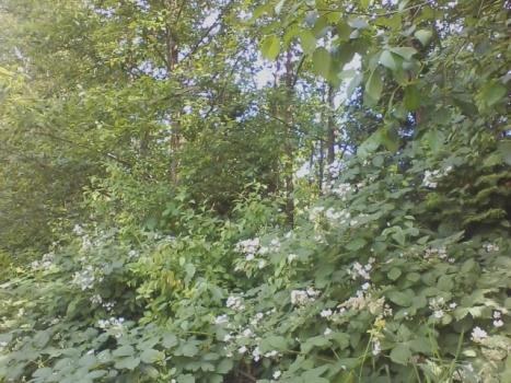 Hawthorne_garden_8