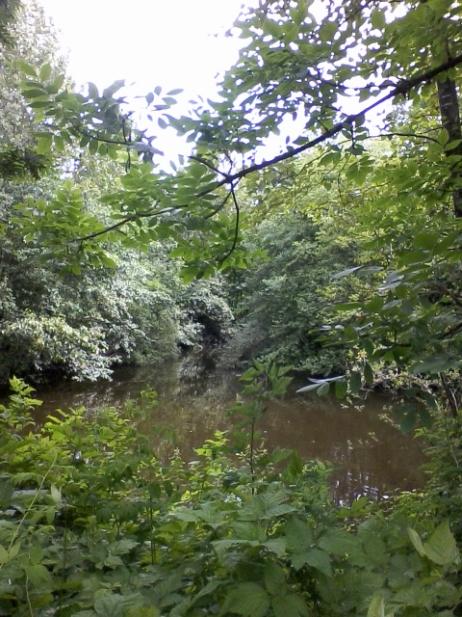 hawthorne_pond_1